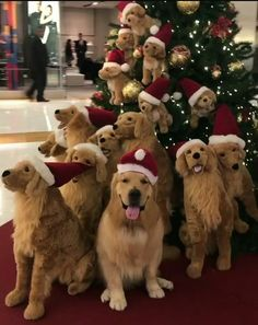 The many things we love about the Intelligent Golden Retriever Puppy Beautiful Dogs, Animals Beautiful, Cute Animals, Dogs Golden Retriever, Retriever Puppy, Golden Retrievers, Christmas Animals, Christmas Dog, Christmas Sweets
