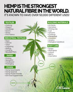 Posted by papasfishin Hemp vs Cannabis: The Variation Stated – CBD Origin – Medium Study Additional. Ganja, Cbd Hemp Oil, Oil Benefits, Pyrex, Cactus Plants, Body Care, Herbalism, The Cure, Nature