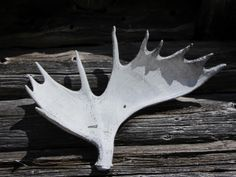 Elgjakt Mossjøen i Gausdal Statsalmenning - Inatur. Hunting License, Norway, Moose Art, Animals, Animales, Animaux, Animal, Animais