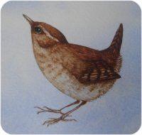 wren watercolour by Janet Clare