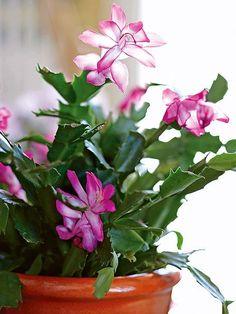 Las suculentas son las plantas perfectas para los jardineros olvidadizos. El…