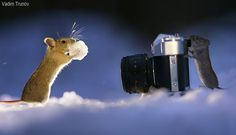 Squirrels and other rodents have a blast in the snow.