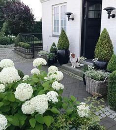 palette and textures Outdoor Retreat, Outdoor Rooms, Front Garden Entrance, Landscape Design, Garden Design, Patio Plants, House Plants, Concrete Garden, White Gardens