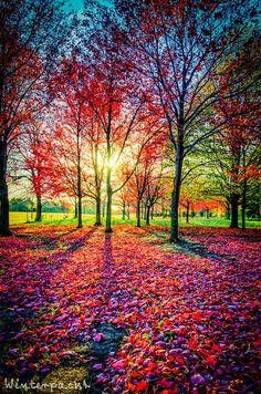 - holy shit - marvelous - Field of Red by Raf Winterpacht - Photo 43731692 / Scenery Wallpaper, Landscape Wallpaper, Colorful Wallpaper, Beautiful Nature Wallpaper, Beautiful Landscapes, Beautiful Gardens, Beautiful Sunset, Fantasy Landscape, Landscape Art