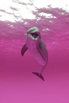 """Fenômeno da natureza que transforma a água em um """"mar de rosas"""", destaca a beleza de um lindo golfinho se divertindo!"""