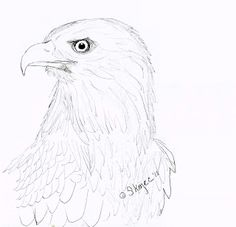 Draw an Eagle | Art class ideas
