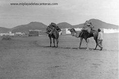 Camellos en Guanarteme. Sobre 1930. - miplaya