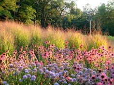 Meadows! I love combining grasses and tough perennials into mass plantings!