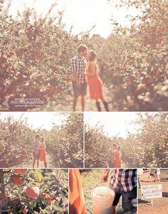 Apple orchard pics