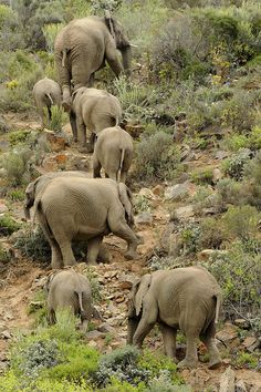 ☀Sanbona Wildlife Elephants by S_Group- What a wonderful sight!!