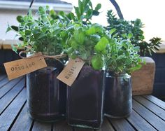 herbs in recycled glass jars