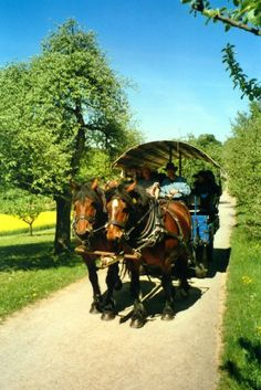 Jochen Bacher - Käsbühlhof covered wagon rides