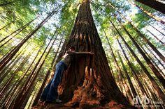 Whakarewarewa Forest Redwood Rotorua New Zealand Rotorua New Zealand, New Zealand North, Redwood Forest, Tree Forest, Travel Images, South Pacific, Travel Photography, Coast, Island