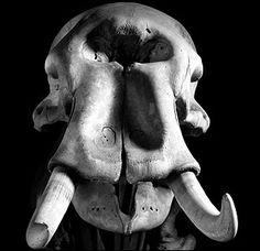 An elephant's skull - Skulls of Deinotherium giganteum. Looks kinda like a Cyclops elephant to me.