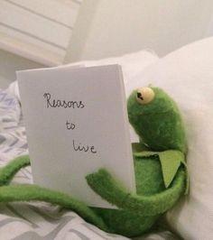 New Memes Funny Kermit Faces Ideas Kermit Face, Kermit The Frog Meme, Funny Kermit Memes, Super Funny Memes, Sapo Kermit, Sapo Meme, Frog Wallpaper, Iphone Wallpaper, Cute Love Memes
