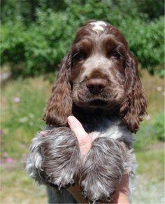 Ahhh look at those ears n paws!