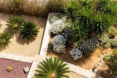 Why should you choose a Drought Tolerant Landscape Design? Garden Animal Statues, Garden Animals, Lawn Edging, Garden Edging, Cacti And Succulents, Planting Succulents, Drought Tolerant Landscape, Sun Plants, Garden Plants