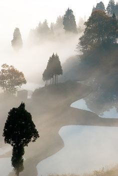 **Japan trees in fog