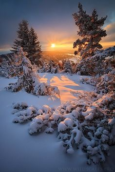 Instant of Light,  By Maxime Courty          As the sun rises through the clouds, the first morning rays illuminate the snowy landscape of the Forez mounts, France.