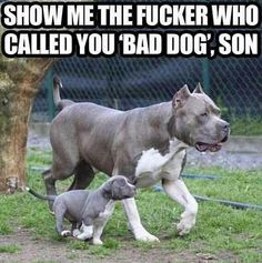 Show me the fucker who called you 'bad dog,' son.