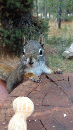 Squirrel and peanut!