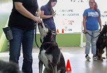 Multi Canin Center | Training pet store pension grooming