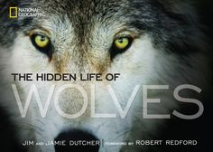 Hidden Life of Wolves cover photo documentary by Jim & Jamie Dutcher, foreword by Robert Redford from press.nationalgeographic.com
