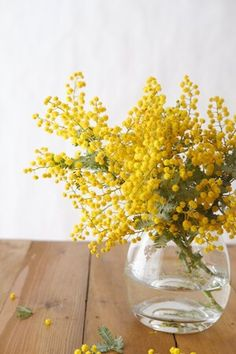 Mimosa--a perfect whimsical yellow accent flower