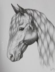 Lovas rajzok!! - Ezt az oldalt annak ajánlom aki IMÁDJA a lovakat!!!
