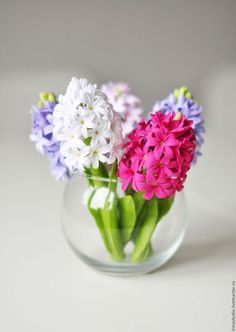 Beautiful Rose Flowers, Beautiful Flower Arrangements, Amazing Flowers, Floral Arrangements, Beautiful Flowers, Cold Porcelain Flowers, Flower Phone Wallpaper, Clay Flowers, Plantation