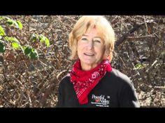Good video explaining growing/pruning blackberries and raspberries. Pruning Blackberries, Growing Raspberries, Black Raspberries, Fruit Garden, Edible Garden, Garden Plants, Organic Gardening, Gardening Tips, Flower Gardening