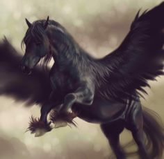 Black Pegasus                                                                                                                                                     More