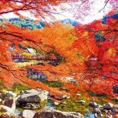 香嵐渓,紅葉 Japanese Landscape, Autumn Leaves, Painting, Beautiful, Fall Leaves, Painting Art, Autumn Leaf Color, Paintings, Painted Canvas