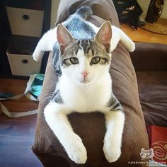 "Kitty Photo From @jessmclark91: ""There's nothing more comfortable than laying spread eagle a..."