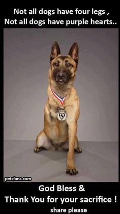 Wicked Training Your German Shepherd Dog Ideas. Mind Blowing Training Your German Shepherd Dog Ideas. Military Working Dogs, Military Dogs, Police Dogs, Military Service, War Dogs, Animals And Pets, Funny Animals, Cute Animals, I Love Dogs
