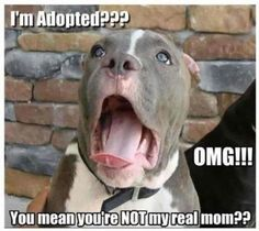 Im adopted funny cute memes animals dogs dog animal meme lol humor funny animals funny pets funny animal