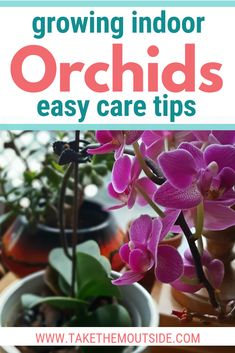 Bring some nature inside and try growing indoor orchids. Learn orchid care tips, reblooming . - Bring some nature inside and try growing indoor orchids. Learn orchid care tips, reblooming tips, - Miltonia Orchid, Phalaenopsis Orchid Care, Orchid Plant Care, Dendrobium Orchids, Orchid Plants, Potted Plants, Indoor Plants, Orchid Leaves, Moth Orchid