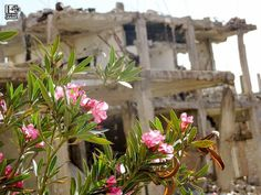 جورة شريباتي جنوب دمشق في 15\5\2016 Joret Shrebati South of Damascus on 15\5\2016 #Syria #Damascus #دمشق #سوريا #عدسة_شاب_دمشقي