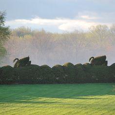 Ladew Gardens - Topiary Swans
