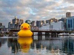 Pato de borracha gigante invade porto de Sidney - Mundo - iG
