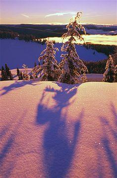 Image: Oregon (© Craig Tuttle/Design Pics Inc./Rex)
