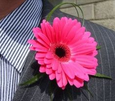 { Pink Gerbera Buttonhole }
