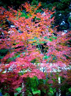 Awesome Pink Trees