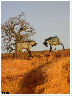burkina faso   Burkina faso Landscape Burkina Faso