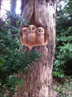 Chainsaw carved 3 baby owls, We all living beings are made of the same energy an. Chainsaw carved 3 baby owls, We all living beings are made of the same energy and substance either mater or antimatter, therefore we have to respect l. Tree Carving, Wood Carving Art, Wood Carvings, Chainsaw Carvings, Art Sculpture En Bois, Wood Creations, Baby Owls, Owl Babies, Owl Art