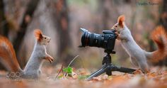Photo session squirrels by vadimtrunov #animals #pets #fadighanemmd