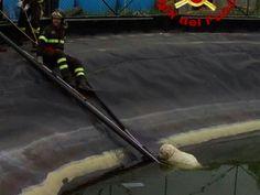 Due cagnolini nel vascone della discarica di Colleferro: i pompieri ne salvano uno :http://www.qualazampa.news/2017/04/18/due-cagnolini-nel-vascone-della-discarica-di-colleferro-i-pompieri-ne-salvano-uno/