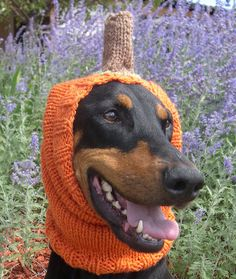 Knitted Snood for Dog  photo prop  Pumpkin Snood by Pixieknitscafe, $40.00