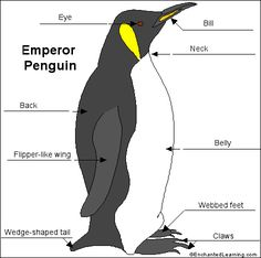 Emperor Penguin   Penguin videos, Infos and National geographic kids