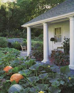 back porch pumpkin patch